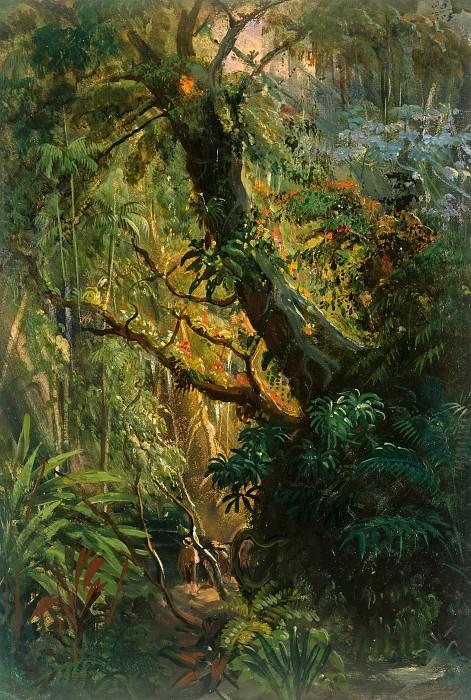 Tropical Vegetation. Johann Rugendas