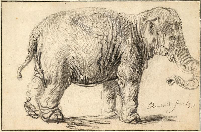 An Elephant. Rembrandt Harmenszoon Van Rijn