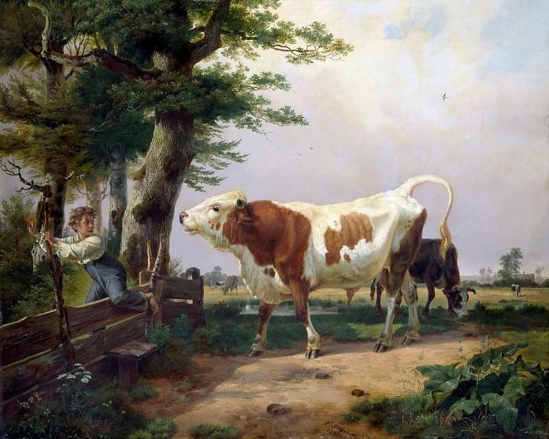 Взбесившийся бык. Фридрих Зимлер