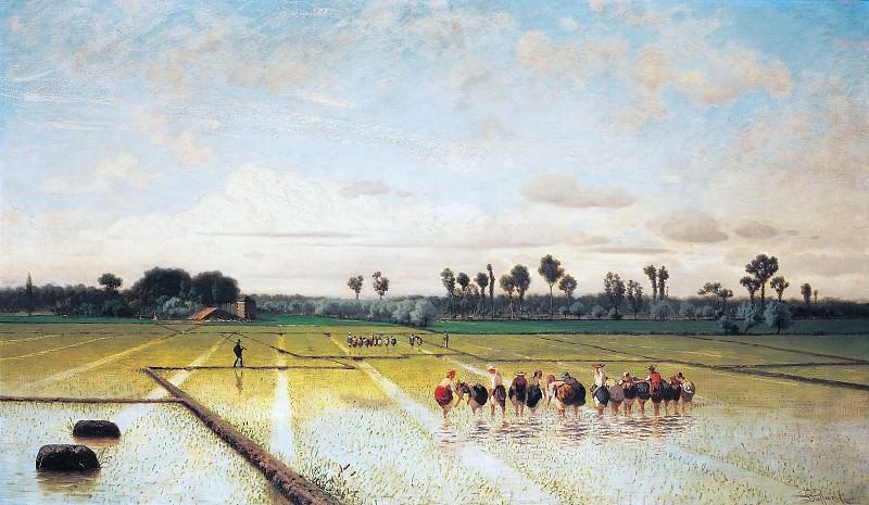 A paddy field. Luigi Steffani