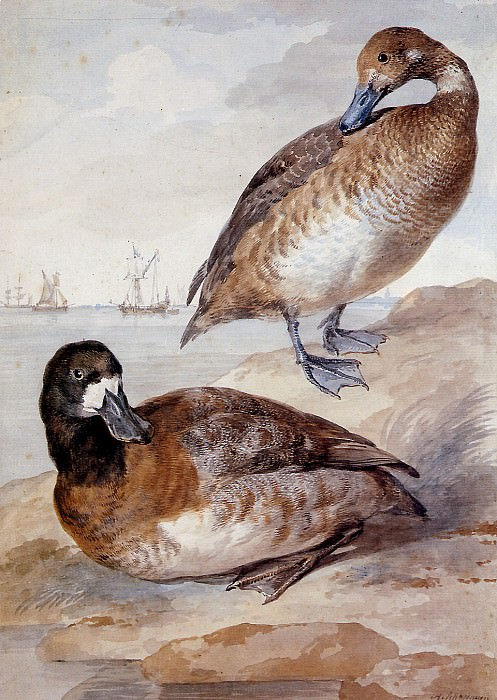 Schouman Aert Pair of ducks Sun. Aert Schouman