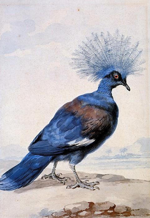 Schouman Aert Crowned pigeon Sun. Aert Schouman