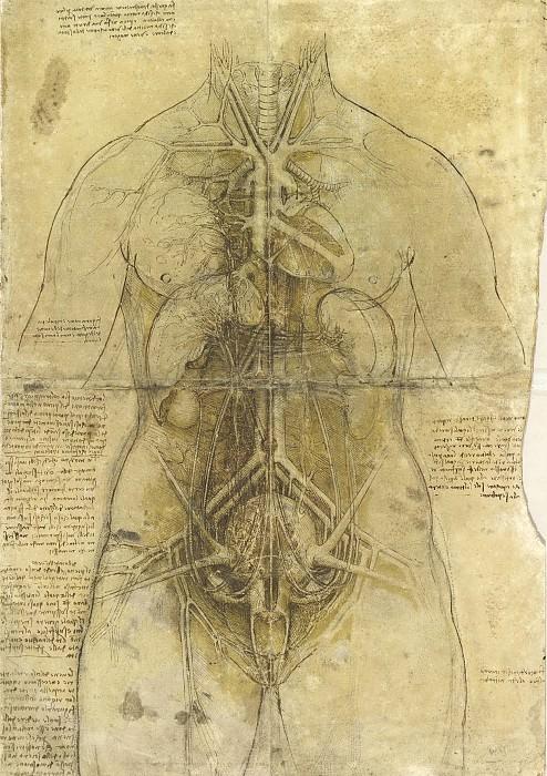 The cardiovascular system and principal organs of a woman. Leonardo da Vinci
