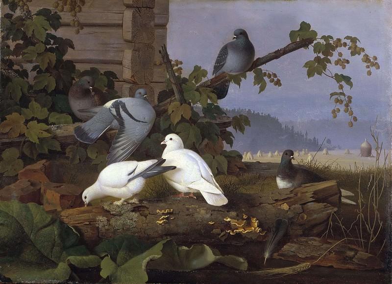 Pigeons. Ferdinand von Wright