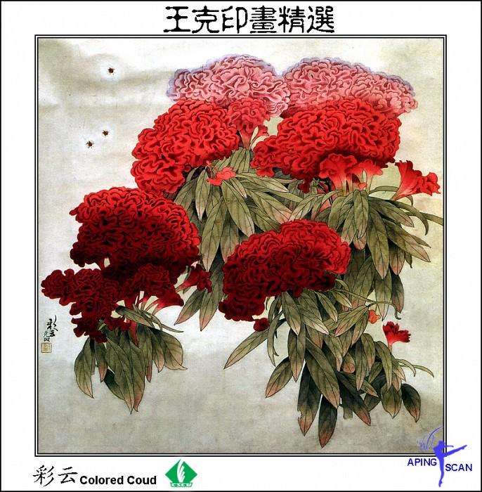 CSCU aping 2k3 wang ke yin 041. Инь Ван Кэ