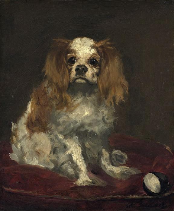A King Charles Spaniel. Édouard Manet