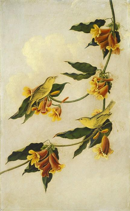 Кидд, Джозеф Бартоломью (копия работы Джона Джеймса Одюбона) - Желтые камышевки. Национальная галерея искусств (Вашингтон)
