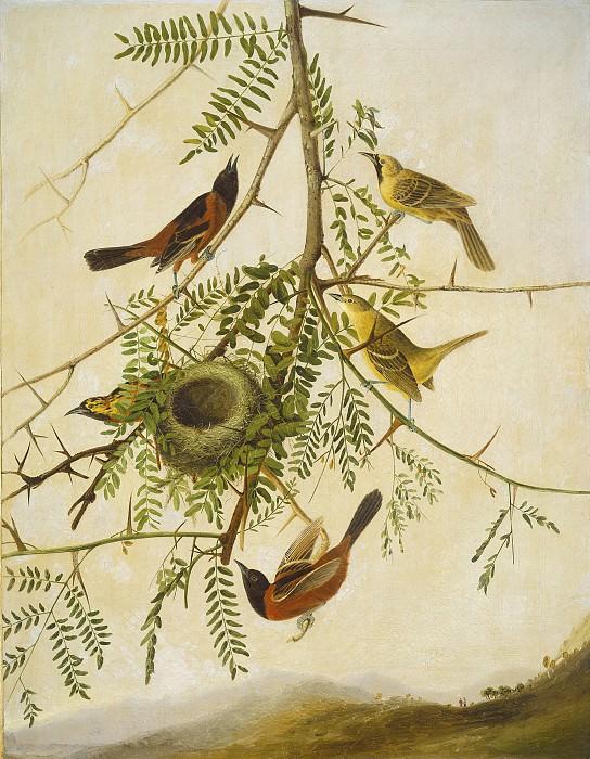 Joseph Bartholomew Kidd after John James Audubon - Orchard Oriole. National Gallery of Art (Washington)
