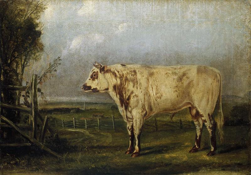 Attributed to John Woodhouse Audubon - A Young Bull. National Gallery of Art (Washington)
