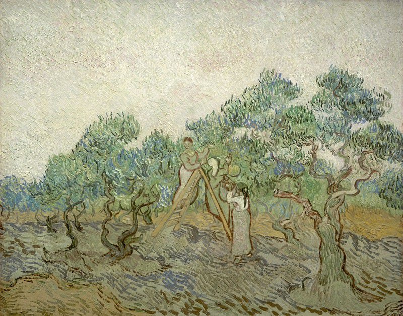 The Olive Orchard. Vincent van Gogh