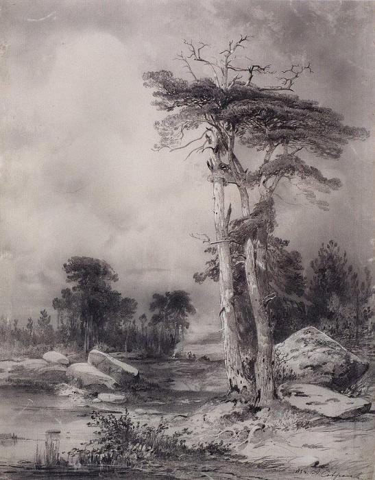old pine. 1854. Alexey Kondratievich Savrasov