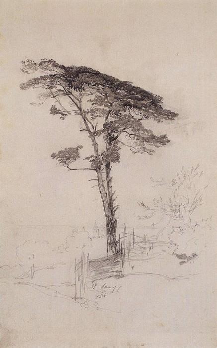 Pine. 1854. Alexey Kondratievich Savrasov