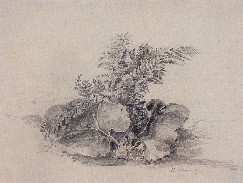 fern leaves and burdock. 1854. Alexey Kondratievich Savrasov
