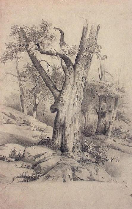 oak. 1850. Alexey Kondratievich Savrasov