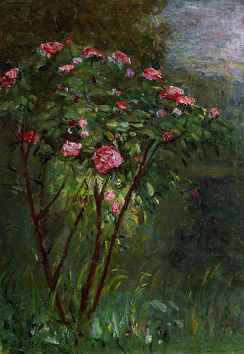 Rose Bush in Flower - 1884. Gustave Caillebotte