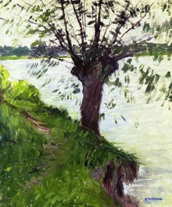 Willow on the Banks of the Seine. Гюстав Кайботт