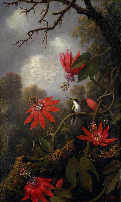 Martin Johnson Heade - Hummingbird and Passionflowers. Metropolitan Museum: part 1