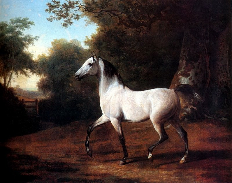 Agasse Jacques Laurent A Grey Arab Stallion In A Wooded Landscape. Swiss artists
