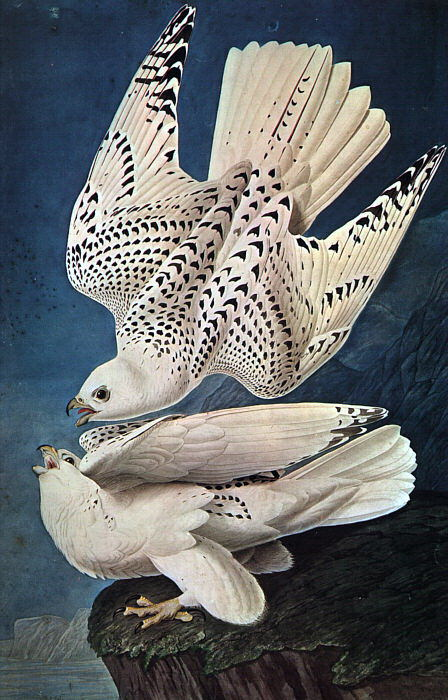 Audubon, John James (American 1785-1851). American artists
