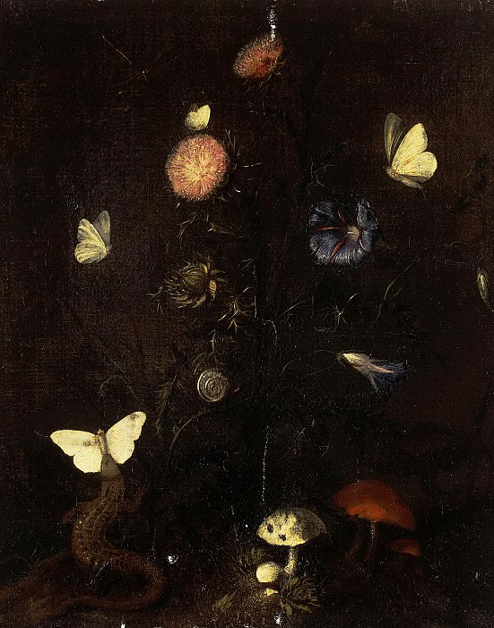 Streep, Christian Jans van. Flowers, lizards and butterflies. Hermitage ~ part 11