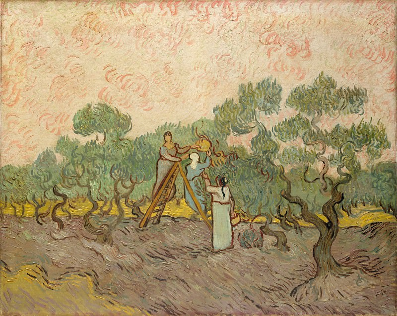 Women Picking Olives. Vincent van Gogh
