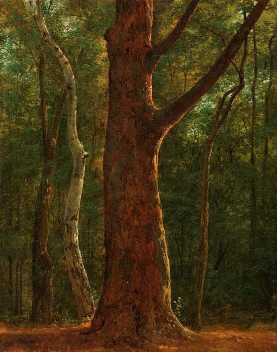 Achille-Etna Michallon - Beech Tree. Metropolitan Museum: part 3