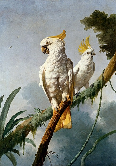 Barraband Jacques A Pair Of Sulphur Crested Cocatoos. French artists