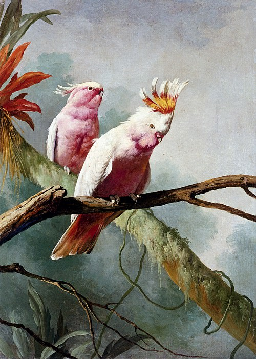 Barraband Jacques A Pair Of Leadbeaters Cocatoos. French artists