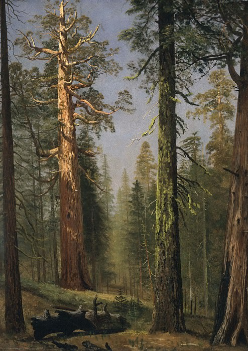Albert Bierstadt - The Grizzly Giant Sequoia, Mariposa Grove, California. Los Angeles County Museum of Art (LACMA)