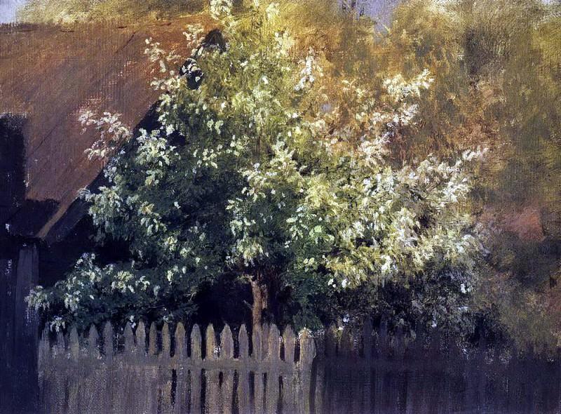 Черемуха. Начало 1880-х. Исаак Ильич Левитан