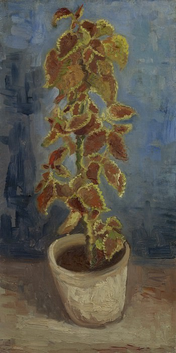 Колеус в цветочном горшке. Винсент Ван Гог