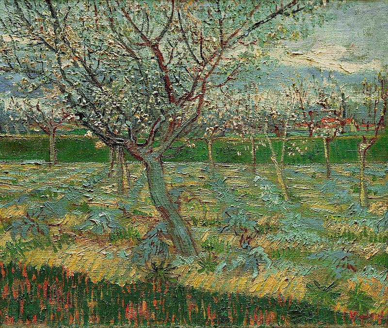 Абрикосовые деревья в цвету. Винсент Ван Гог
