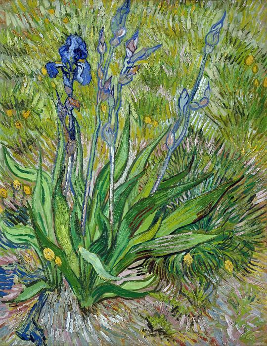 The Iris. Vincent van Gogh