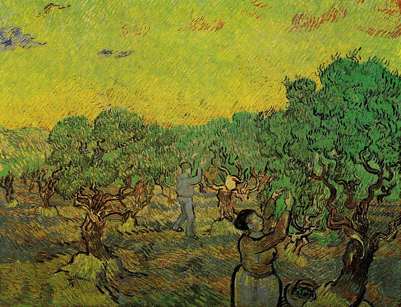 Olive Picking. Vincent van Gogh