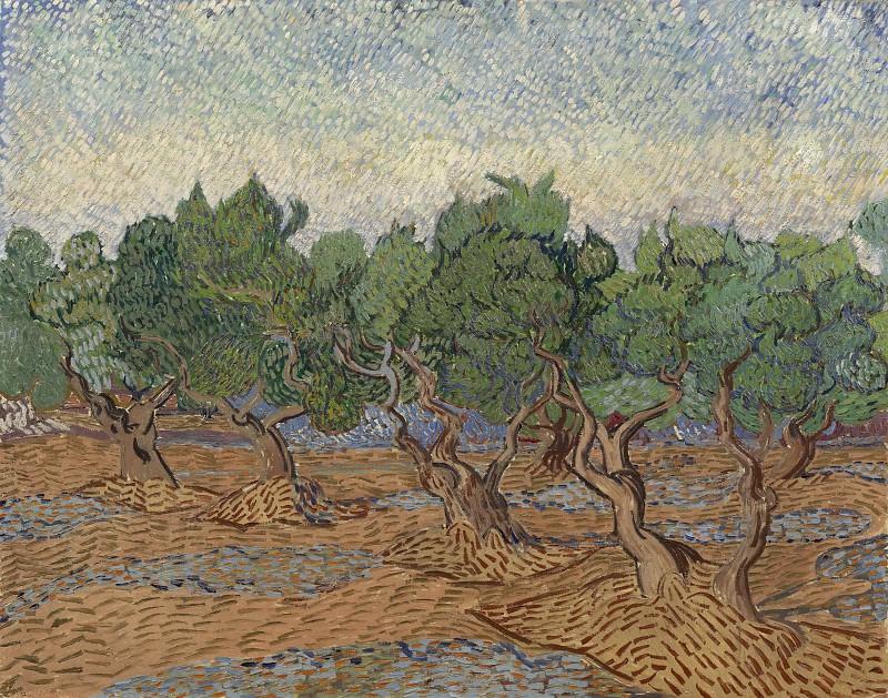 Olive Grove. Vincent van Gogh