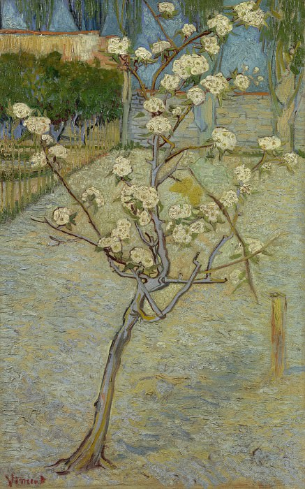 Blossoming Pear Tree. Vincent van Gogh