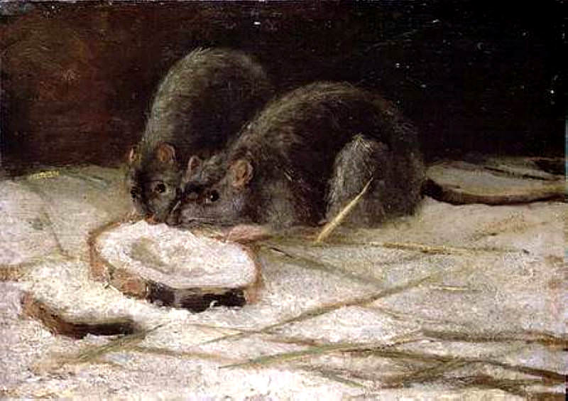 Two Rats. Vincent van Gogh