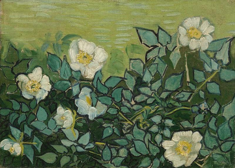 Wild Roses. Vincent van Gogh