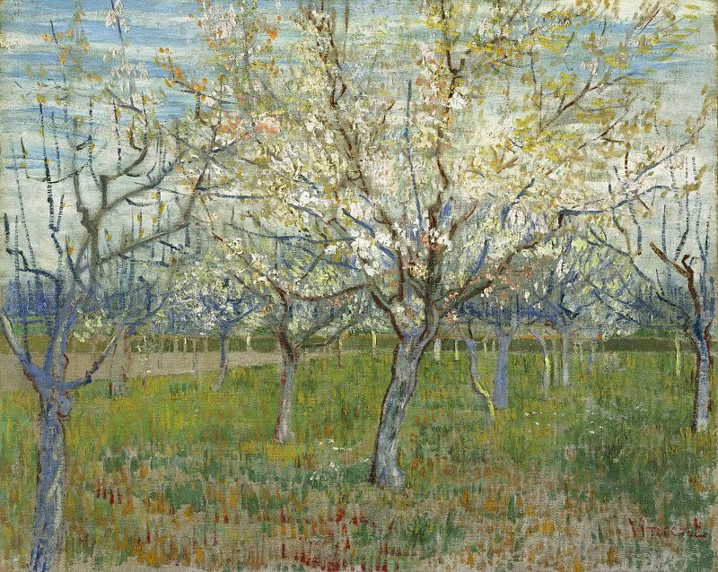 Orchard with Blossoming Apricot Trees. Vincent van Gogh
