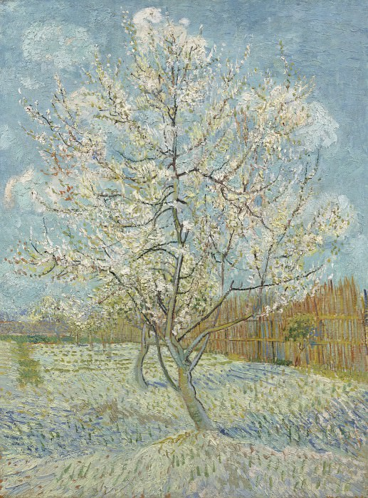 Peach Tree in Blossom. Vincent van Gogh