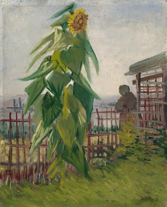 The Garden with Sunflower. Vincent van Gogh