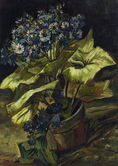Cineraria. Vincent van Gogh