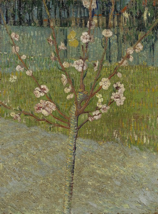 Almond Tree in Blossom. Vincent van Gogh