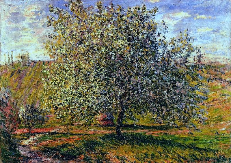 Tree in Flower near Vetheuil. Claude Oscar Monet