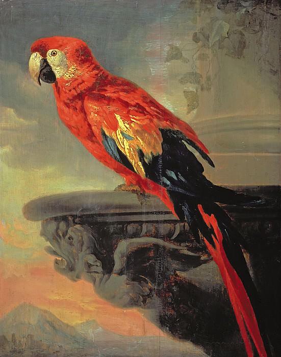 Попугай. Питер Пауль Рубенс