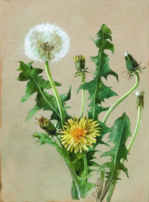 Dandelion, the last quarter of XIX century.. Elizabeth Merkuryevna Boehm (Endaurova)