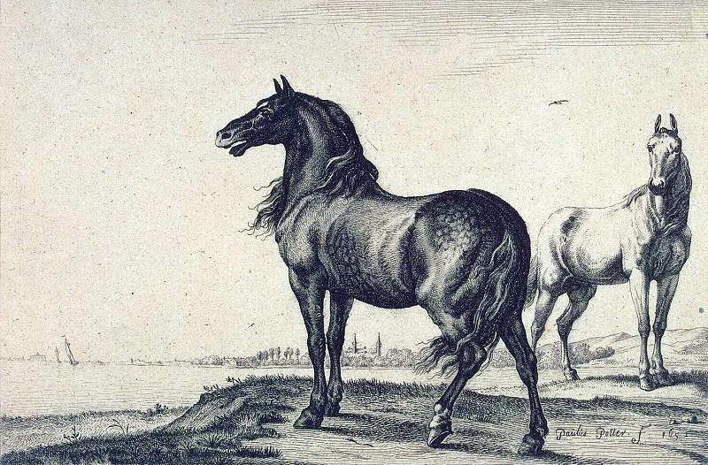 Potter, Paulus - Two horses. Hermitage ~ part 10