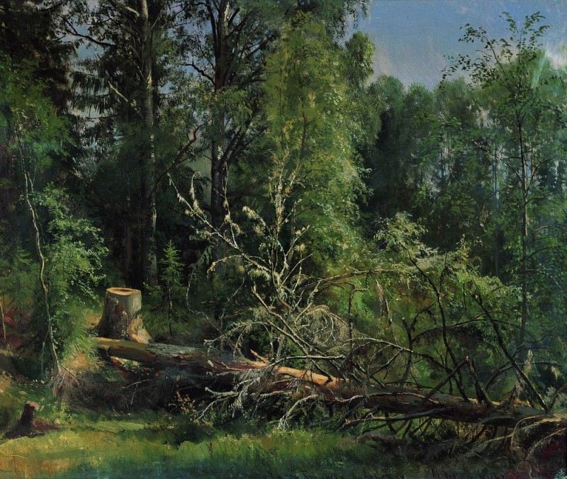 50h59 felled tree in 1875, 5. Ivan Ivanovich Shishkin