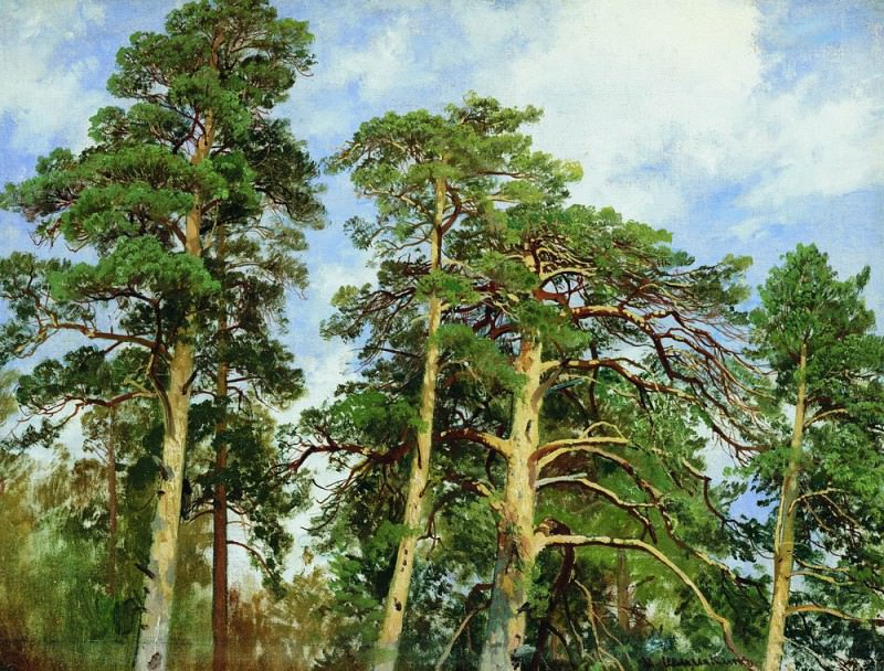 tops of the pines. Etude 1890 40. 7h53. Ivan Ivanovich Shishkin