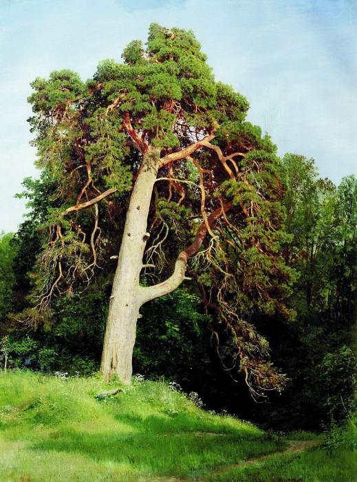 Pine. Merikyul 1894 110h83. Ivan Ivanovich Shishkin